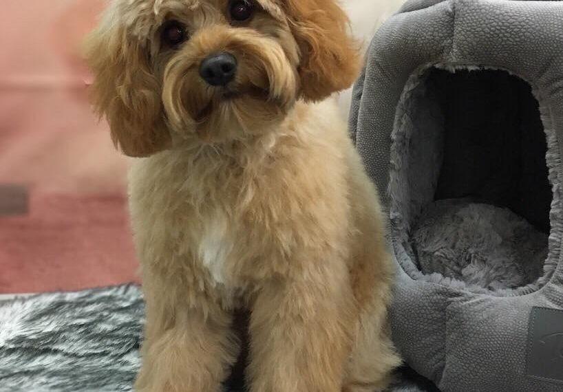 Yuppy Puppy Day Spa